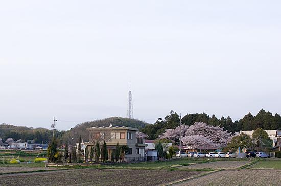 桜思い出-10