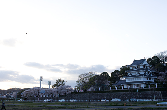 桜思い出-12