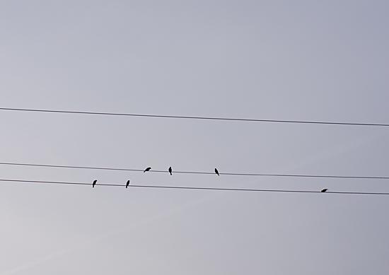 鳥風景-8
