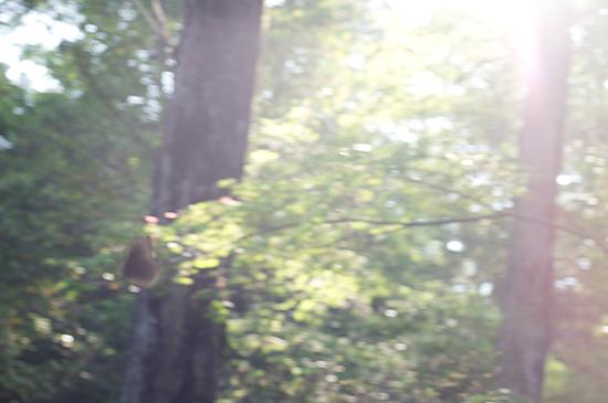 森林公園-7