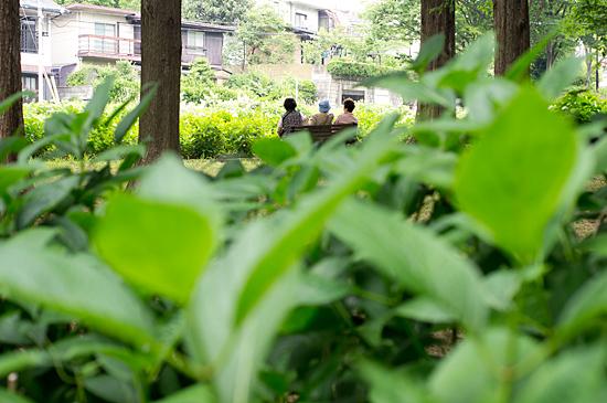茶屋が坂公園-3