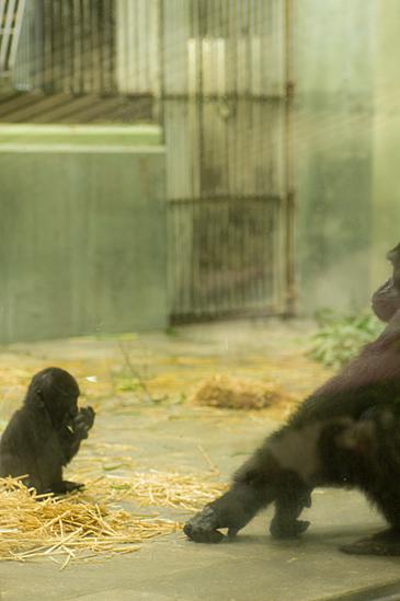 動物園1-2
