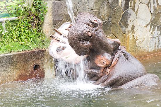 動物園2-6