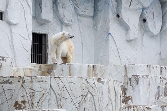 動物園2-9