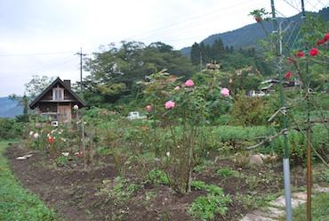 花畑261012