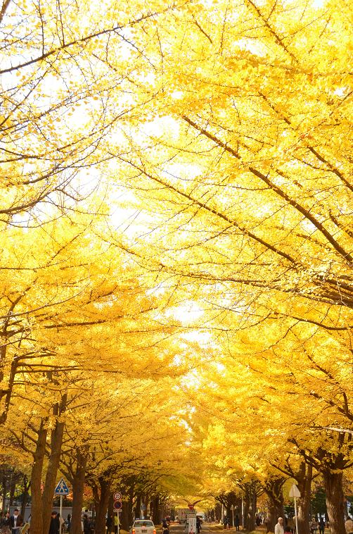 北海道_36