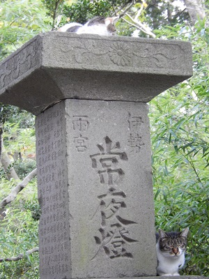 櫻岡大神宮ねこ1