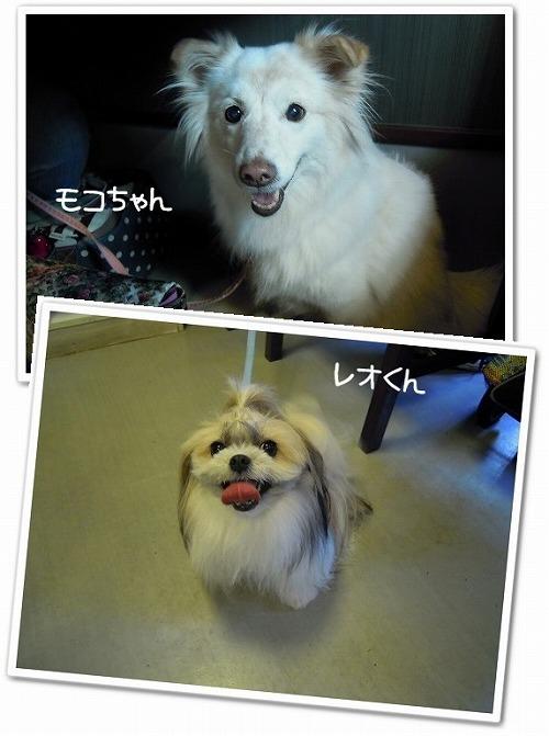 ドッグカフェ NANA&HACHI