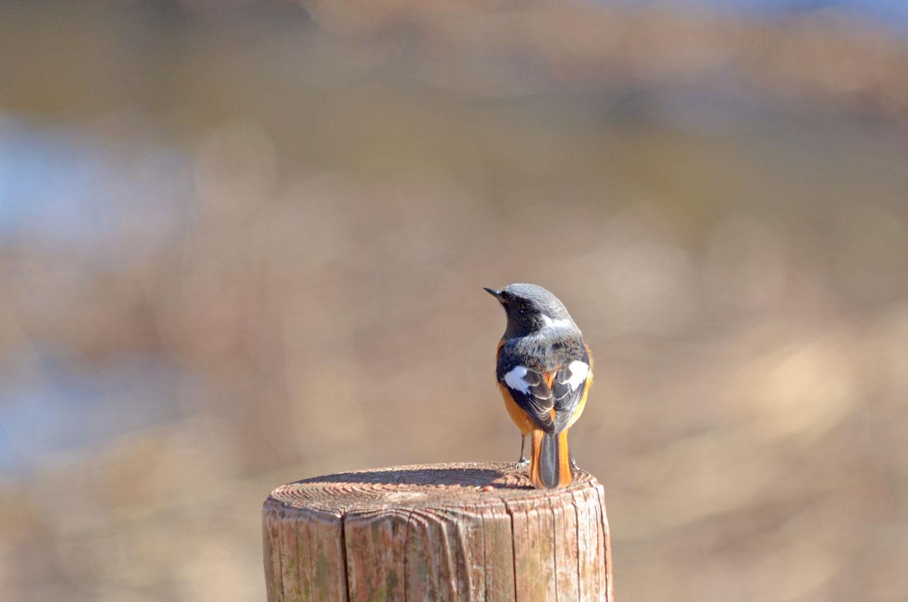 D70_1157手賀沼の鳥