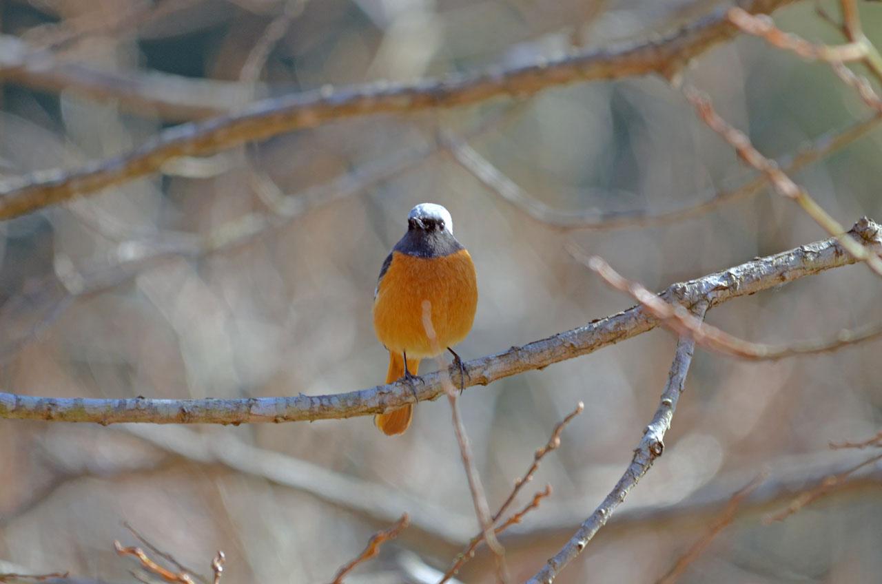 D70_1160手賀沼の鳥