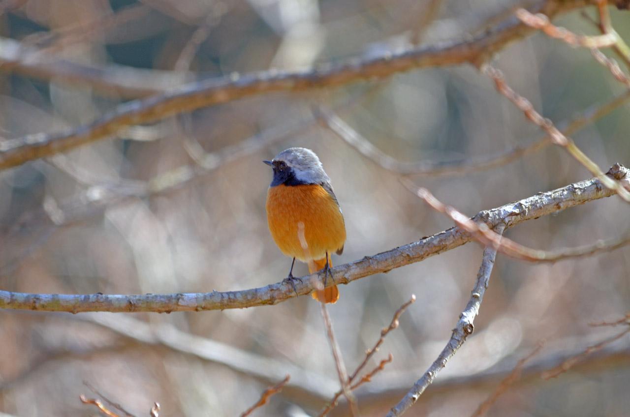 D70_1164手賀沼の鳥