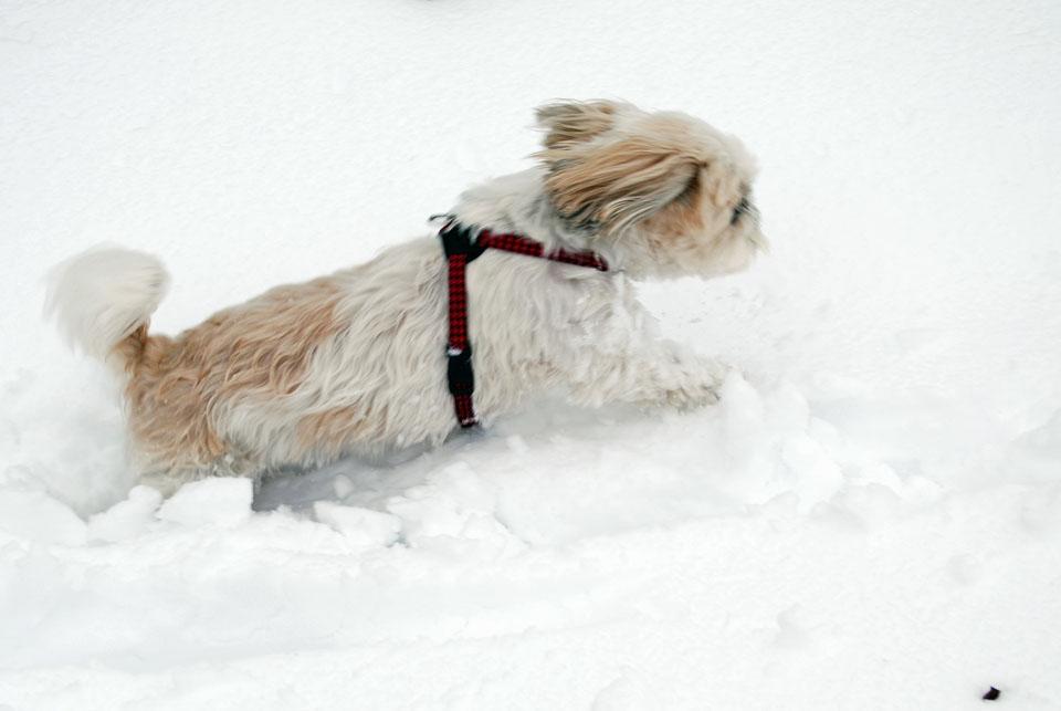 DSC_1848大雪