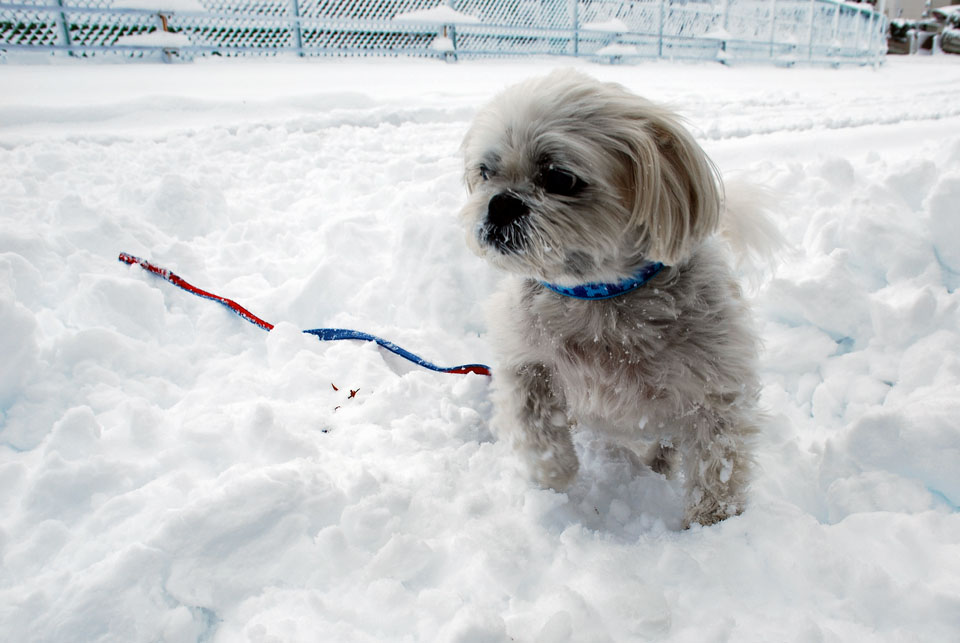 DSC_1829大雪