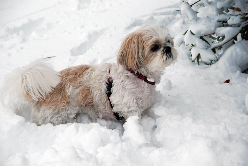 DSC_1859大雪