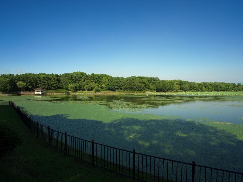 初夏の大泉緑地