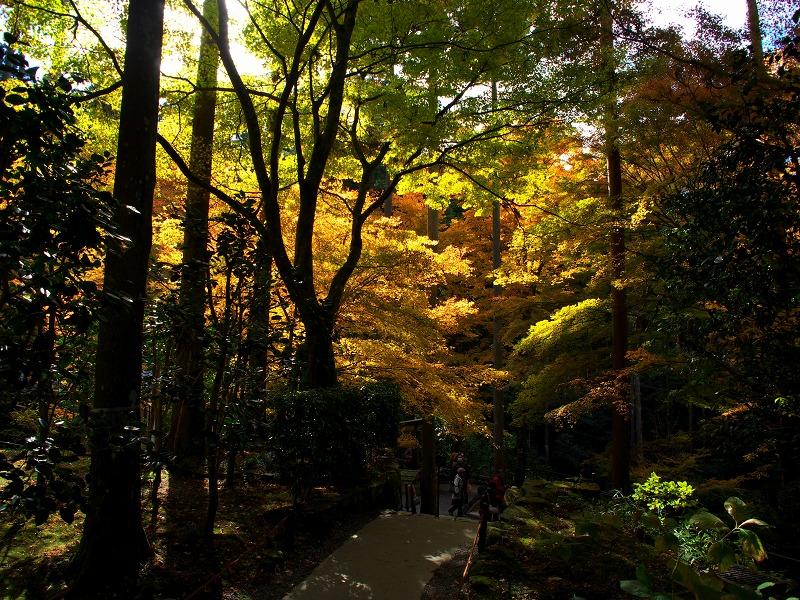 京都大原 三千院 紅葉