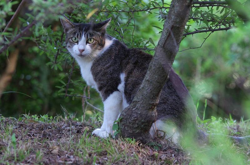 初夏の大泉緑地 猫