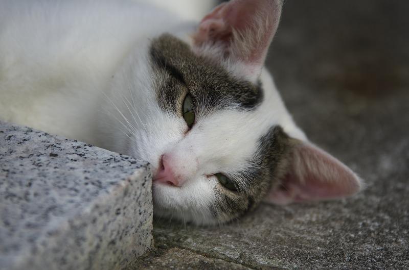 くしもと大橋 猫