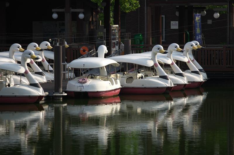 明石海峡公園 白鳥ボート
