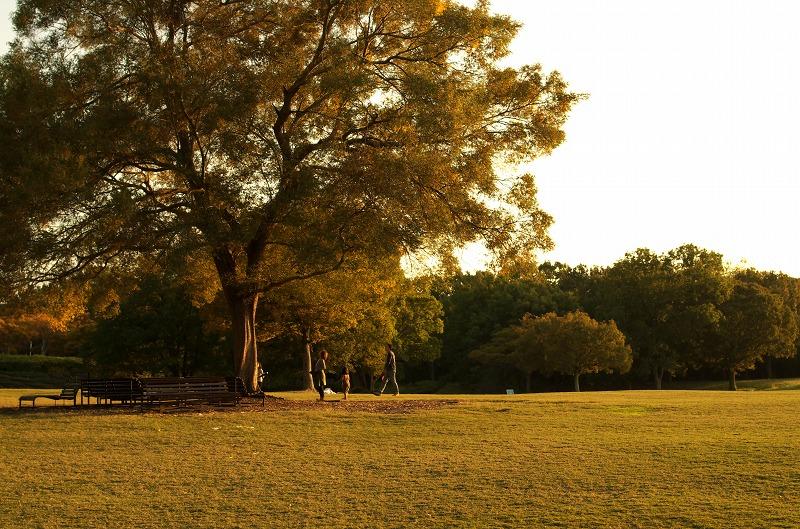 初秋の万博公園 自然文化園