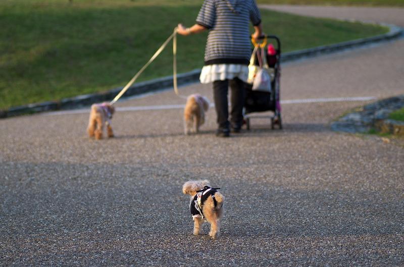 服部緑地公園 犬の散歩