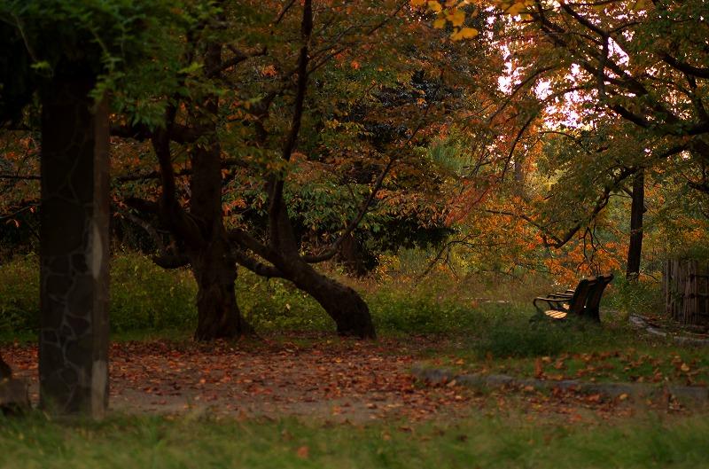 服部緑地公園 紅葉