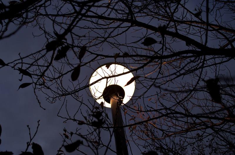 狭山池 街灯