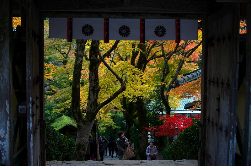京都大原 寂光院 紅葉