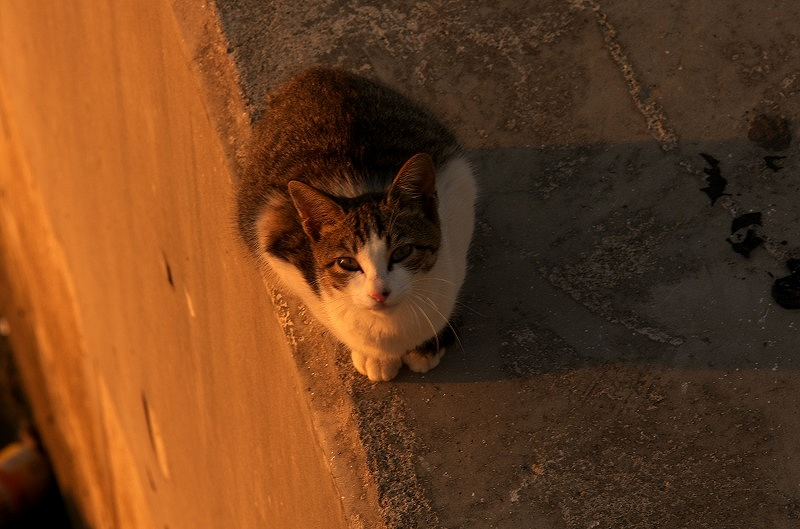 旧堺燈台 堺泉北港 猫