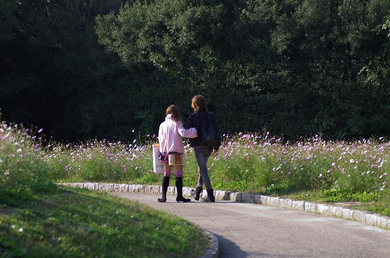 コスモスフェスタ2013 in 万博公園