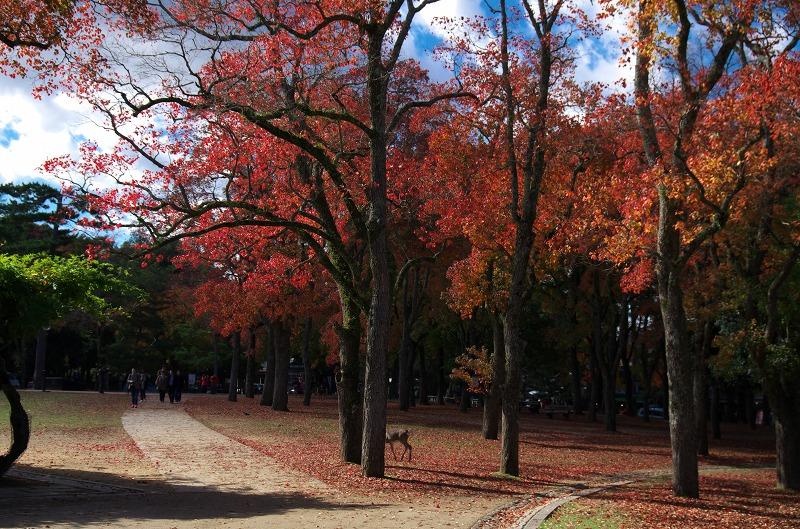 奈良公園 紅葉