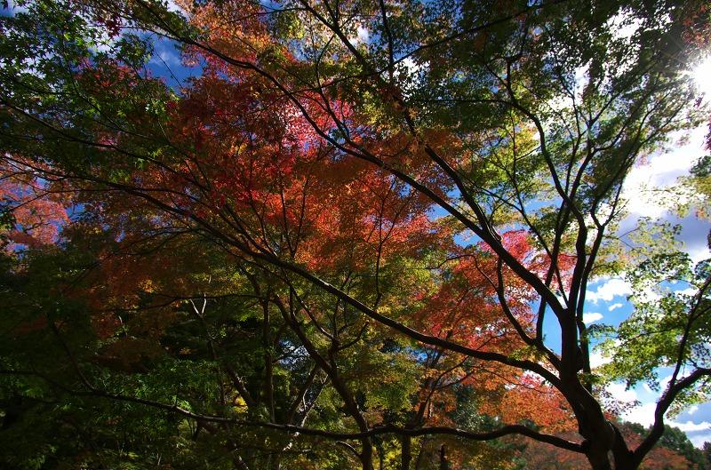 奈良公園 紅葉 モミジ