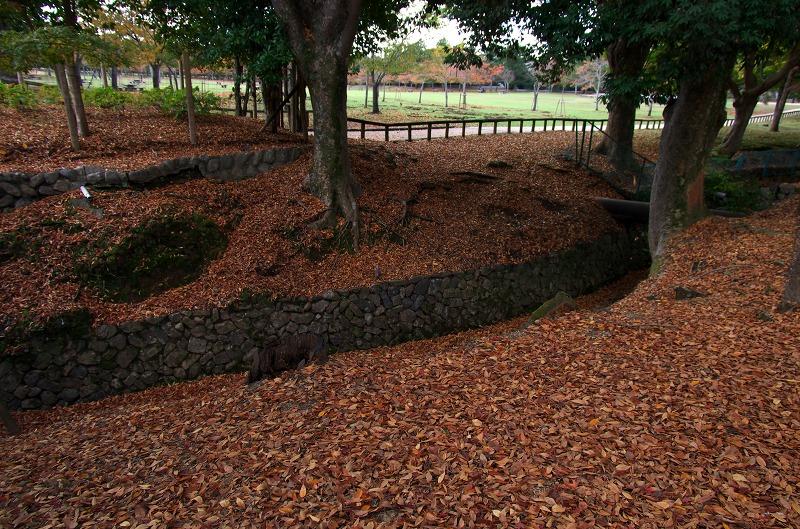 奈良公園 落葉