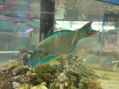 熱帯魚水槽①
