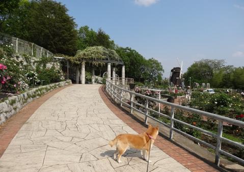 2012、鶴見緑地のバラ園2