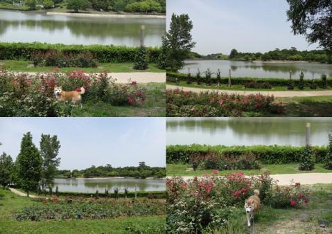 2012、蜻蛉池公園2