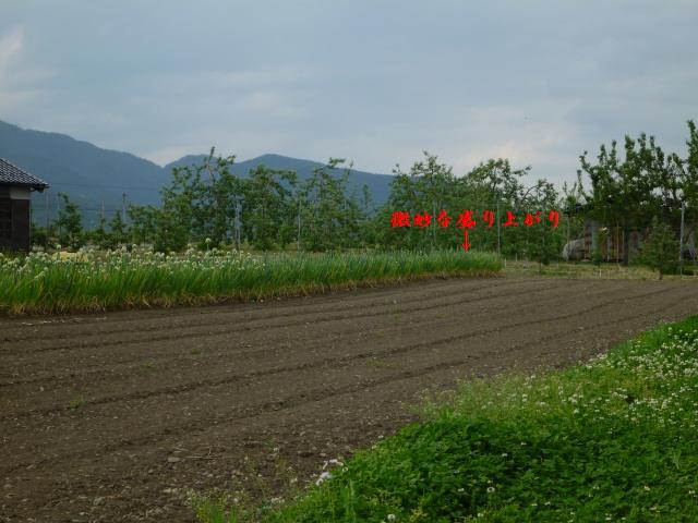 honnkamisawa45 (10)
