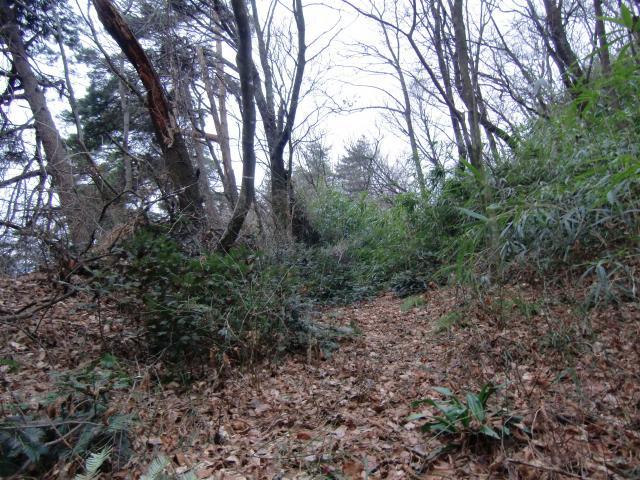 sakurasakagami6.jpg