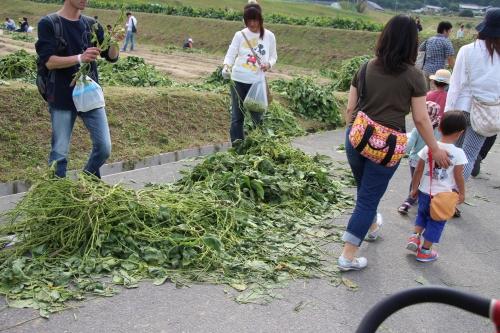 穂谷コスモス畑収穫祭