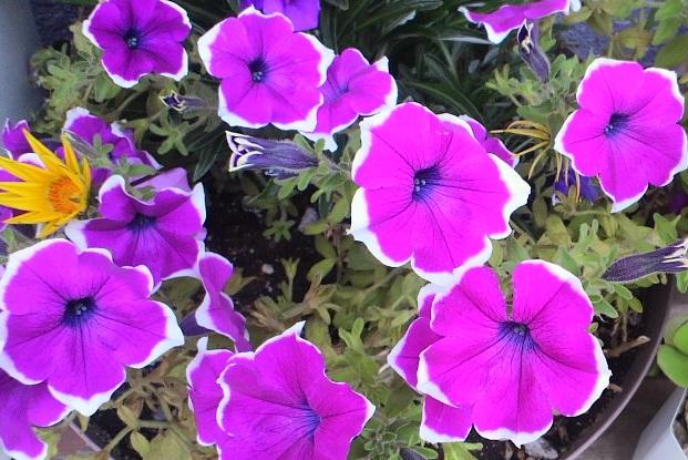 紫5-22