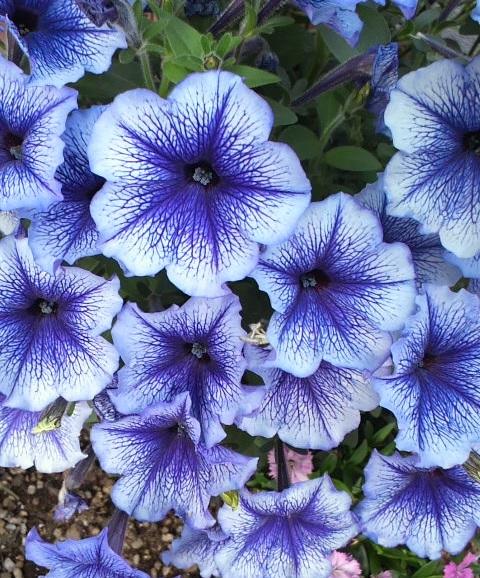 青い花5-22