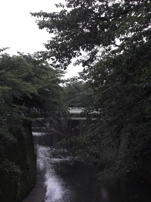 石神井川452