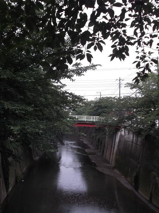 石神井川44