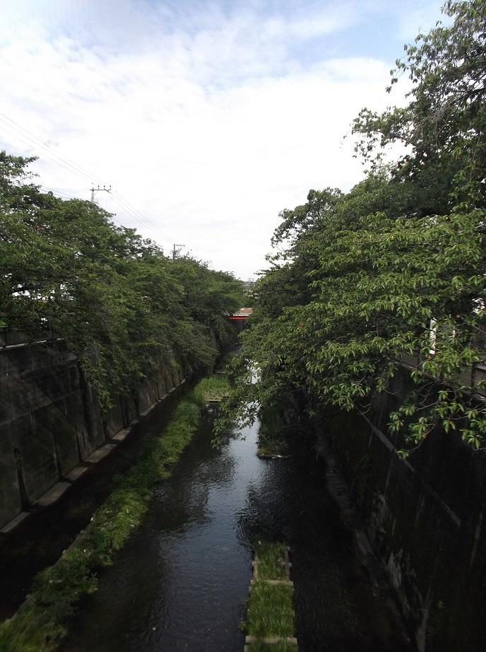 石神井川061503