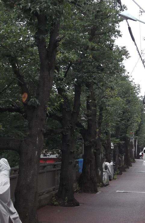 石神井川沿道1