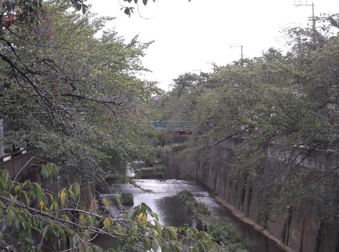 石神井川147