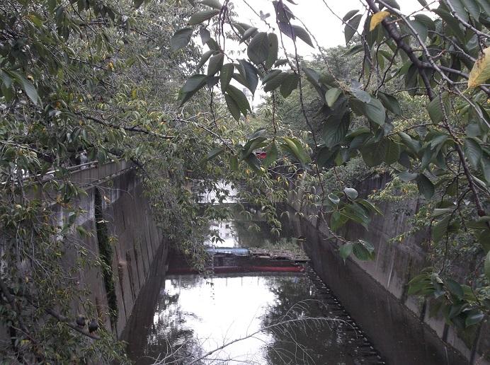 石神井川149
