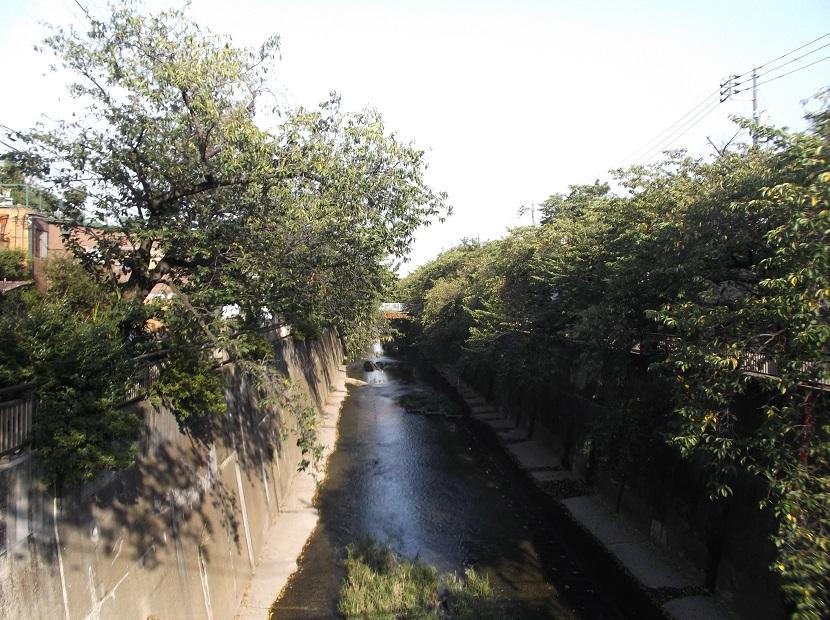 石神井川169