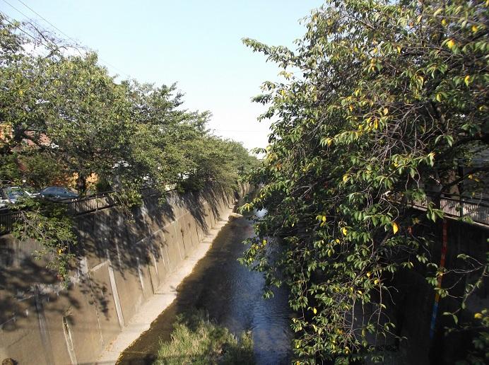 石神井川170