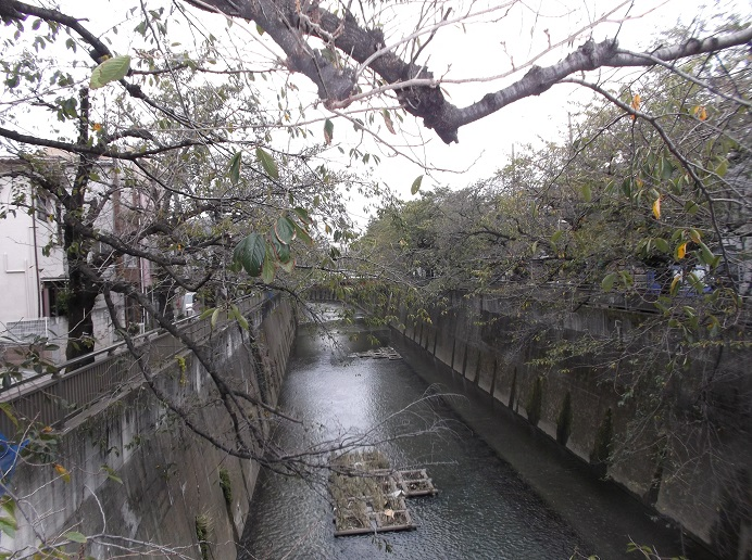 石神井川252